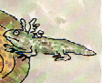 "Drawing of an Axolotl by William Steig from ""Alpha Beta Chowder"""